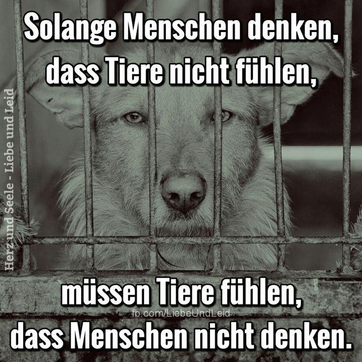 Solange Menschen, dass Tiere nicht fühlen…