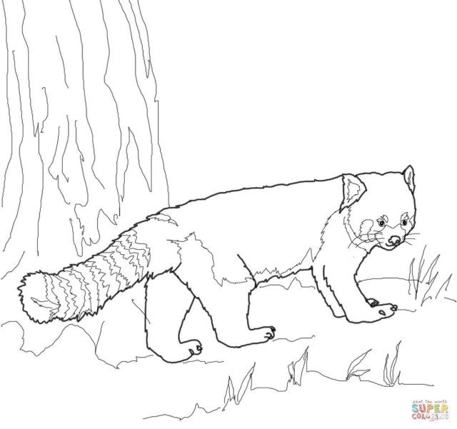 Exclusive Picture Of Red Panda Coloring Page Panda Coloring