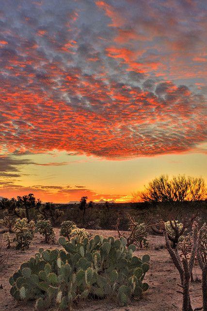 Sunset, AZ, desert cacti, clouds, golden, colour, solitude, stunning, breathtaking, photography, photo