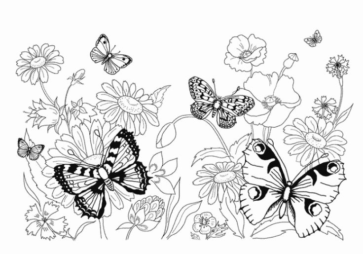 505 best images about butterfly coloring on pinterest