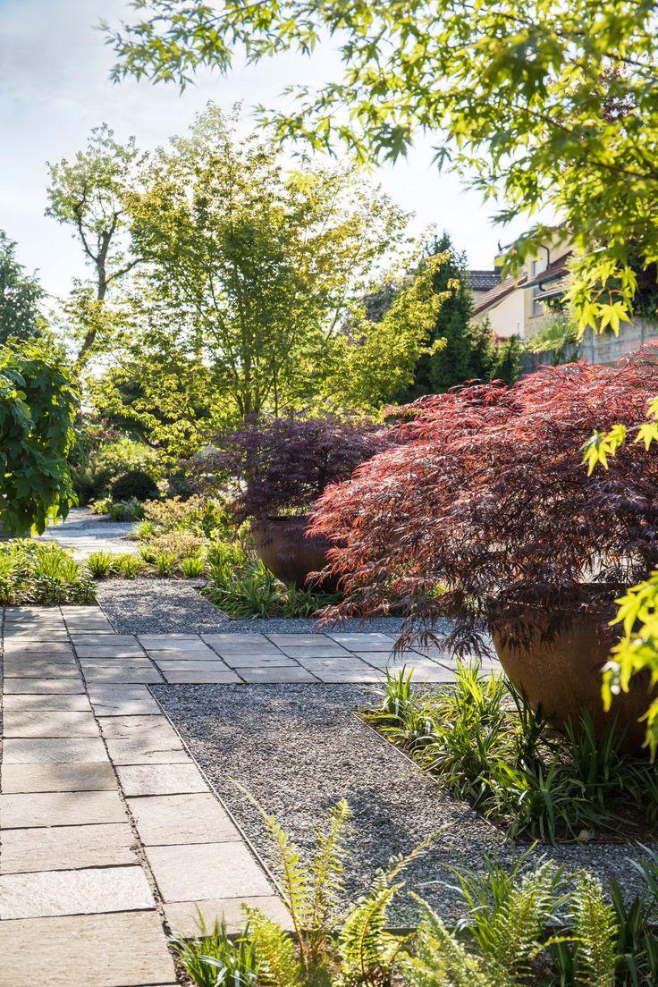 Moderner Vorgarten mit japanischem Ahorn - PARC'S Gartengestaltung GmbH, Rapperswil-Jona