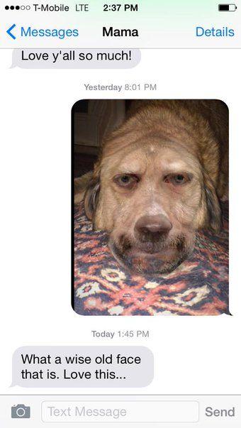 Twitter, mom thinks this paul giamatti/dog morph is real dog pic!
