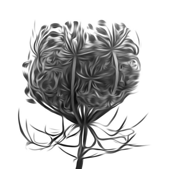 Hogweed Plant #Print Based on a Photograph for Instant Download. Beautiful Plant #Printable (Digital Photography) to Decorate or Update your Home Decor. Just Print and Hang :... #handmade #décor #poster #blackandwhite #print #printable #art #etsy #wallart #love ➡️ http://jto.li/vJu5U