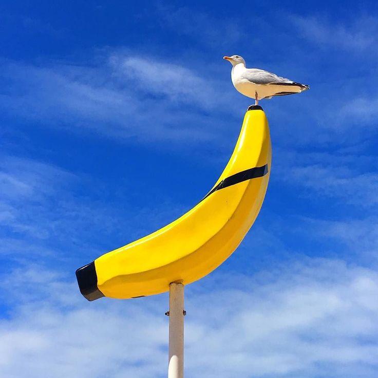 Vous reprendriez bien un peu de bleu  de soleil  de jauuune  de banane et de mouette belge... Spécial dédicace à @fannyandbarry @mellecafeine @quelquechosedanslr ... Doux dimanche à vous tous ....! . #ensemblecesttout #passiloinonestsibien #oostendebeach #ladreamteamforcejaune #labanane #smile #ilovebelgium #skyporn #seagull #banana #jauuune #blue #yellow #panneau #igerfriend #happyfamilyday #latergram @kindofsweetblue75 #juilletencouleur #enprendrepleinlesyeux #petitsplaisirs #oostendebeach