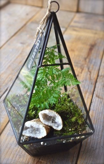 Image of Geometric Crystal Terrarium                                                                                                                                                                                 More