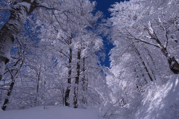 Las na zboczach Połoniny Wetlińskiej, Bieszczady