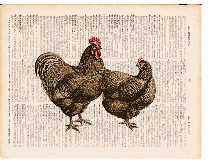 BOGO SALE Brown Chickens Vintage Print Farm Animal Dictionary Page Art Printed On 148 Year