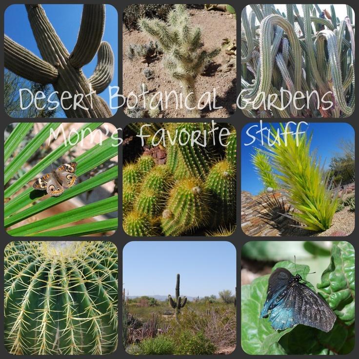 Desert Botanical Gardens