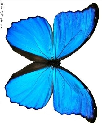 I'm simply fascinated by the blue butterfly.  It has a lot of personal history for me as well.  If you're close enough to me, you know the story.