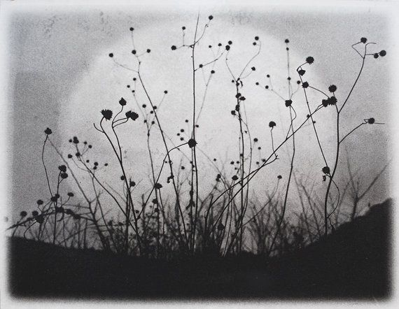 Etching, Moonrise, Charmed Meadow, black, white, gray, solarplate etching on handmade paper