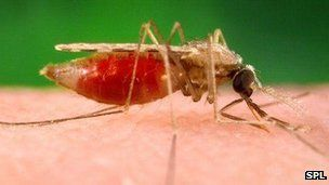 A third of malaria drugs used around the world to stem the spread of the disease are counterfeit, data suggests.