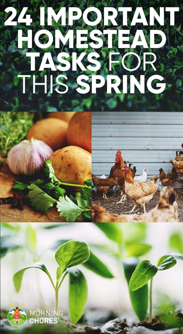 28 Important Tasks You Should Do This Spring on the Homestead
