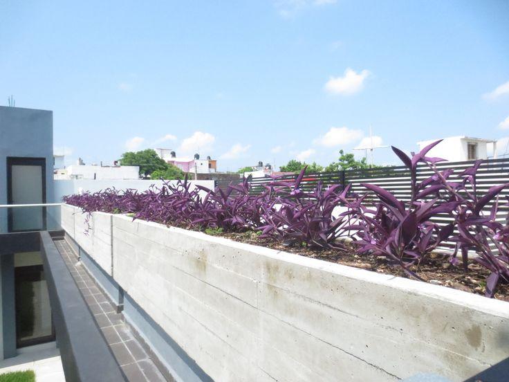 M s de 25 ideas incre bles sobre jardineras de concreto en - Jardineras de cemento ...