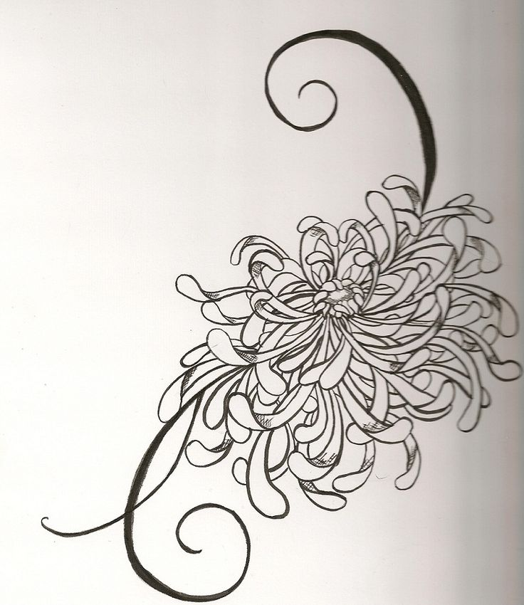 Japanese Chrysanthemum by ~Vivalldi on deviantART~would love to somehow incorporate this into a tattoo for my daughters