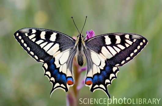1000 Images About Butterflies R Beautiful On Pinterest