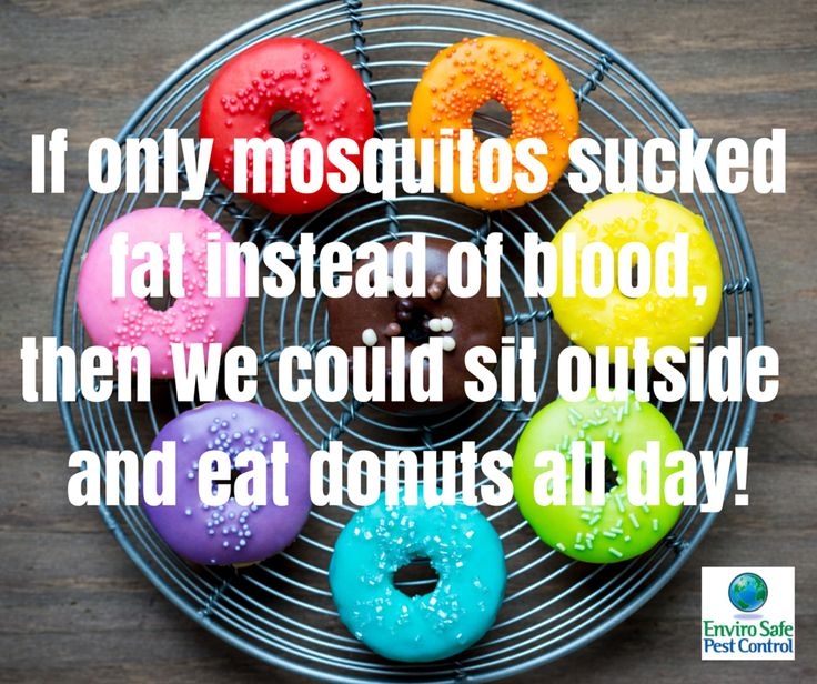 17 best images about just for fun on pinterest far for Mosquito donuts
