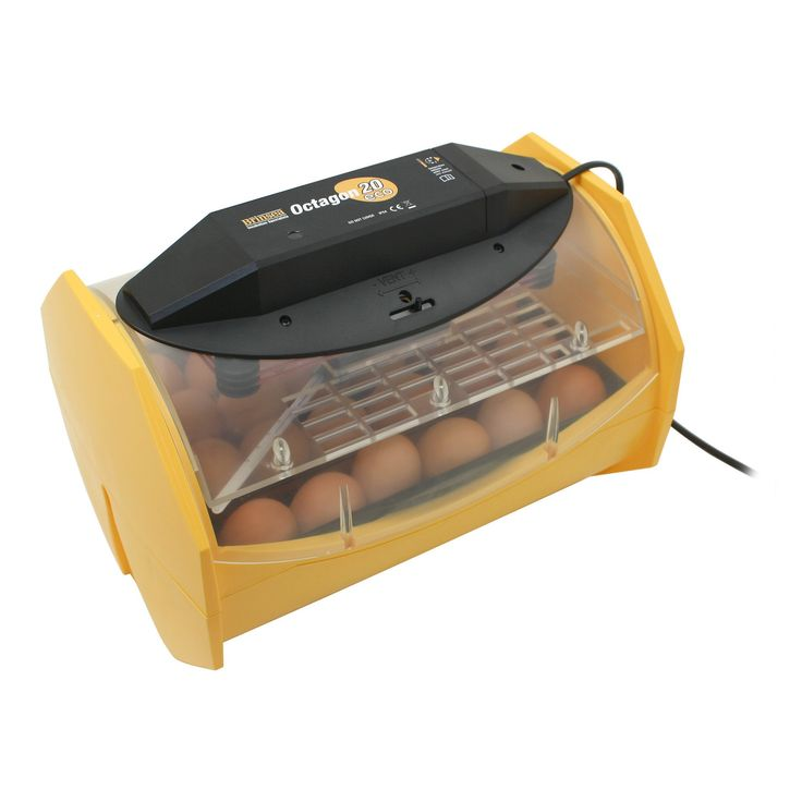 Have to have it. Octagon 20 Eco Manual Egg Incubator - $179.99 @hayneedle
