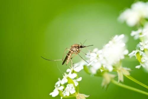 Spray anti-zanzare ecologico fai da te