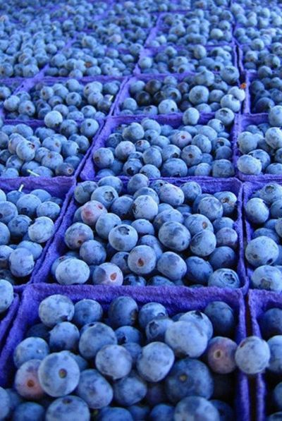 Delicious baskets of blueberries / Petits casseaux de délicieux bleuets  #blue #bleu #Bleuberries #bleuets #myrtilles #fruits #fruit #ReitmansJeans