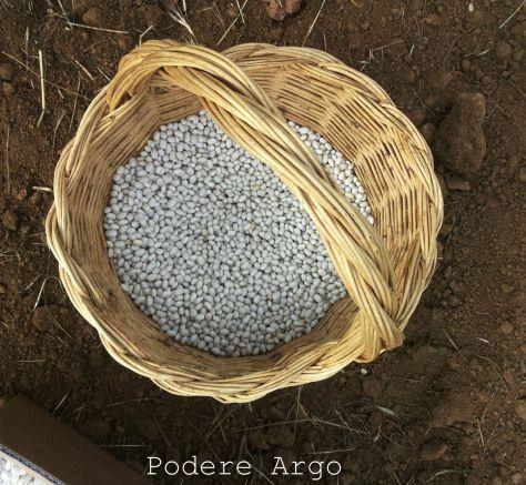 Semina #fagioli #bio del Purgatorio #organic #beans #maremma #tuscany