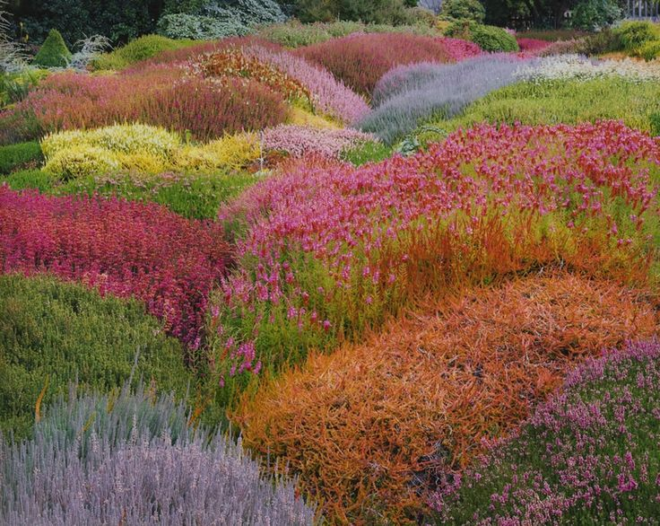 summer heather garden.  Love this as my front garden