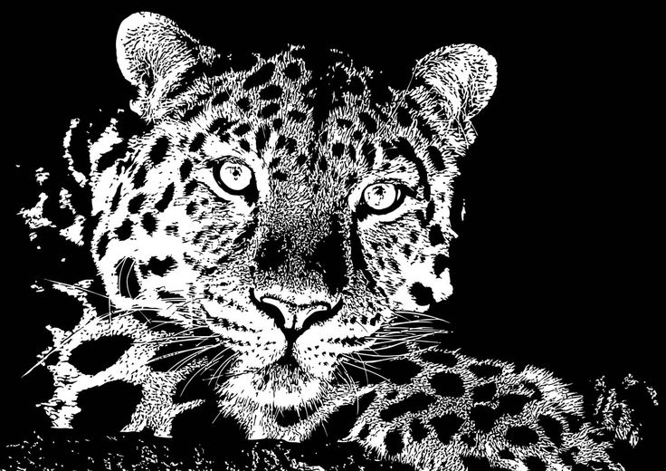 15 Chilled Out Leopard By Chris McCabe - DRAGAN GRAFIX, Stylish Vector Wall Art Posters That You Can Buy In High Resolution PDF Format And Print Any Size You Wish. Decorate Your Walls With Original Art. Only R350 Per Design. Many Designs To Choose From. I Also Create Custom Designed Vector Wall Art. For More Information Call Chris McCabe On 082 482 0076 OR Email chris@dragangrafix.co.za