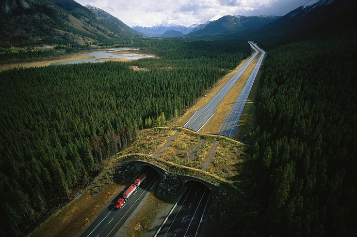 ✭ An overpass for wildlife spans the Trans Canada Highway in Banff