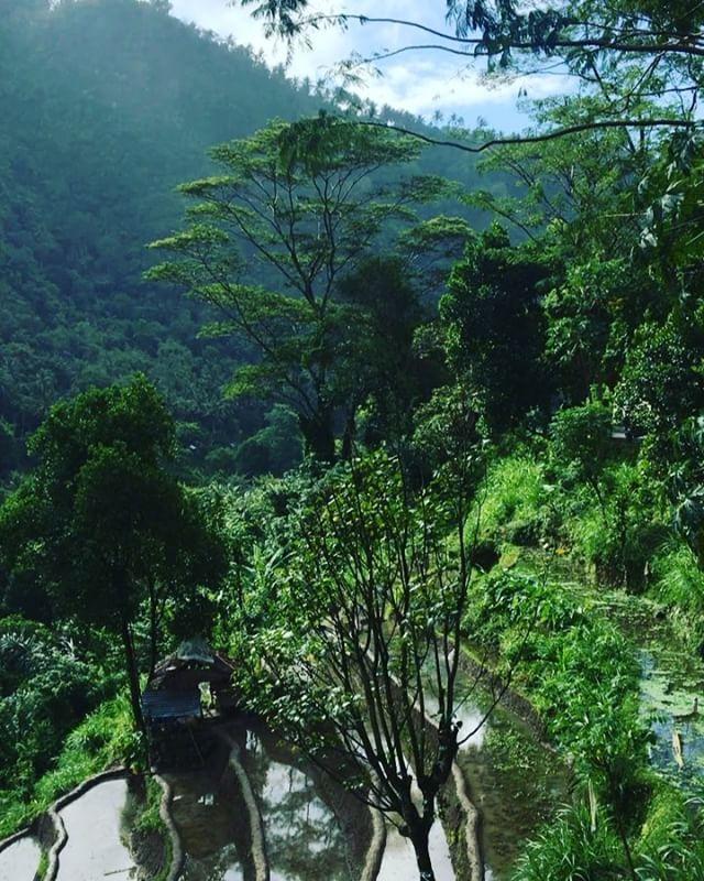 Сегодня первый раз пошёл дождь на Бали 🌴💦Это нас не расстраивает вообще,ведь после него такое солнышко 😍☀️☀️☀️ #bali#indonesia#honeymoon#naturalbeauty Natural Beauty from BEAUT.E