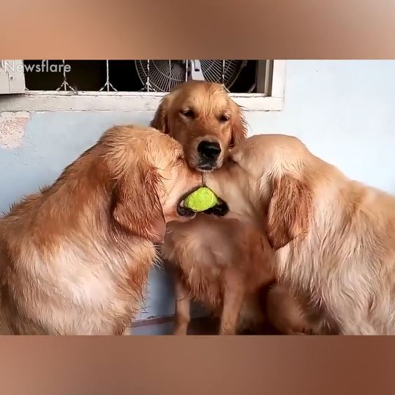 Compilation of cute & funny dogs please follow Animals Board for more videos