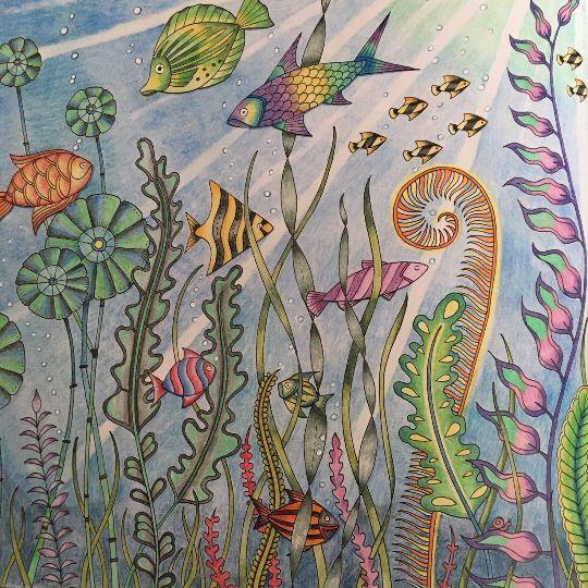 224 Beste Afbeeldingen Over Coloring Johanna Basford