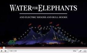 """Bufera su """"Come l'acqua per gli elefanti"""" - Econote.it"""