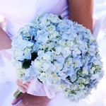 Hydrangea Wedding Flowers Pictures - Page 9 - Project Wedding