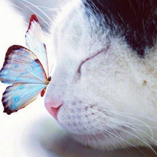 Cuttie #cat #butterfly