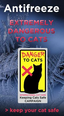 Keeping cats safe – antifreeze poisoning in cats | international cat care