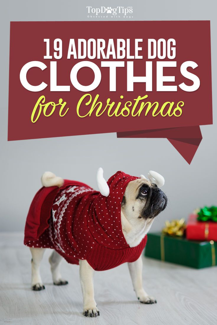 19 Best Dog Christmas Clothes and Costumes (#9 Is Too Cute!) Dressing your dog up for Christmas is simply irresistible. Finding the right costume can be the difficult part, because there are just so many to choose from. When you're having trouble choosing just the right dog Christmas clothes, head wear or costumes, look no further than this list! #dog #clothes #best #dogs #costumes #Christmas #list #top