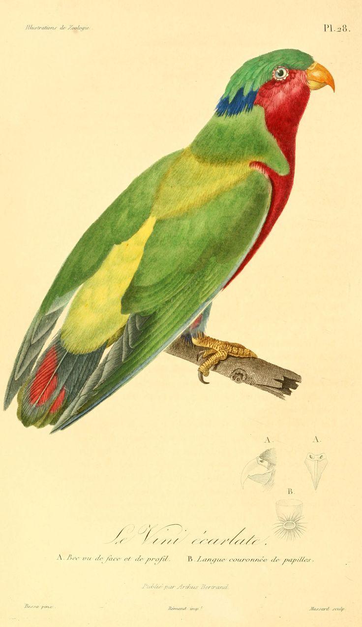 49 best parrot portraiture images on Pinterest | Parrots, Bird ...