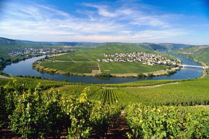 Mosel - Roomalaisten perintö  Mosel-joen ja sen sivuhaarojen, Saarin ja Ruwerin, laaksot ovat Saksan romanttisinta viininviljelyaluetta. Siellä viiniä on viljelty roomalaisten ajoilta asti.