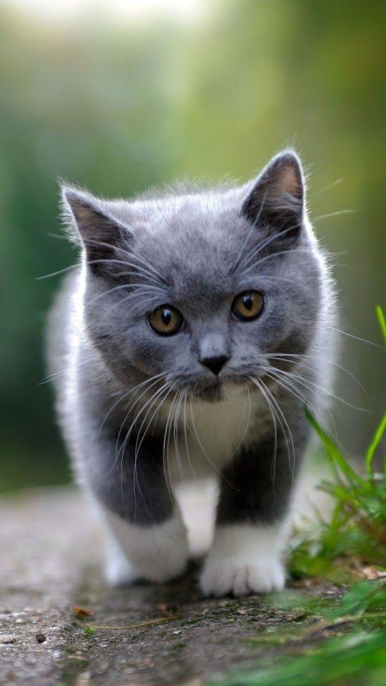 Dark Grey Cat  ♥g♥