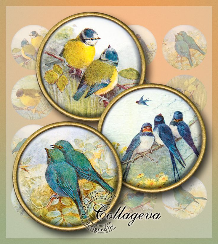 "Little Birds Digital Collage Sheet 1.5"" 1.25"" 30 mm 25 mm 1 inch circles, Vintage Ephemera, Swallow Titmouse Bluebird Round images (EA01-c) by collageva on Etsy"