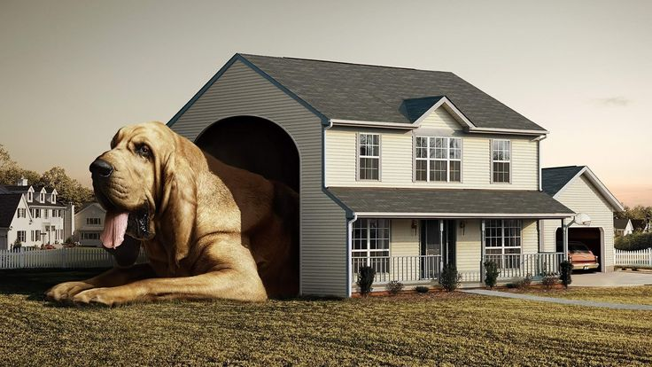 Clifford's House.  I must build this.
