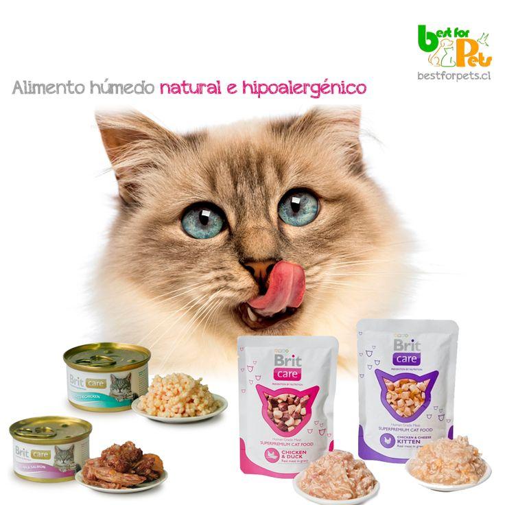 Buscas los mejores alimentos húmedos para gatos? Prueba la línea Brit Care! Hipoalergénicos y muy muy saludables!  bestforpets cl