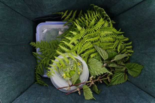 Gift a foraging class!