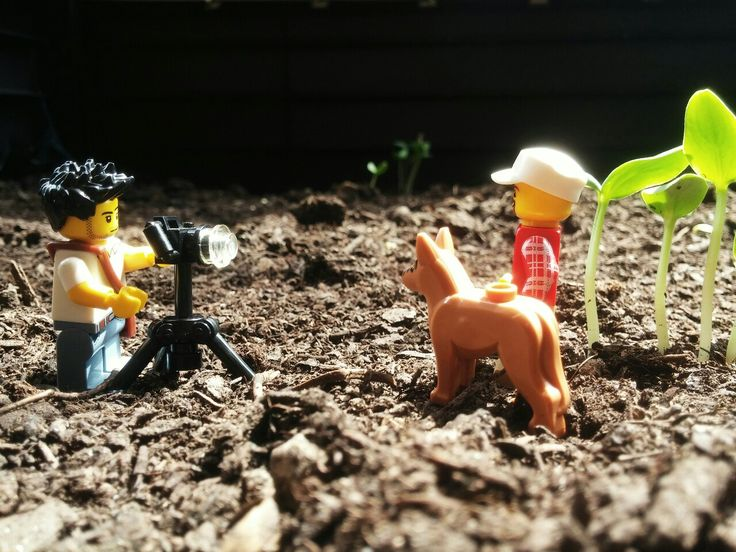 The proud farmer with his dog and cucumber sprouts. #lego #minifig #legography