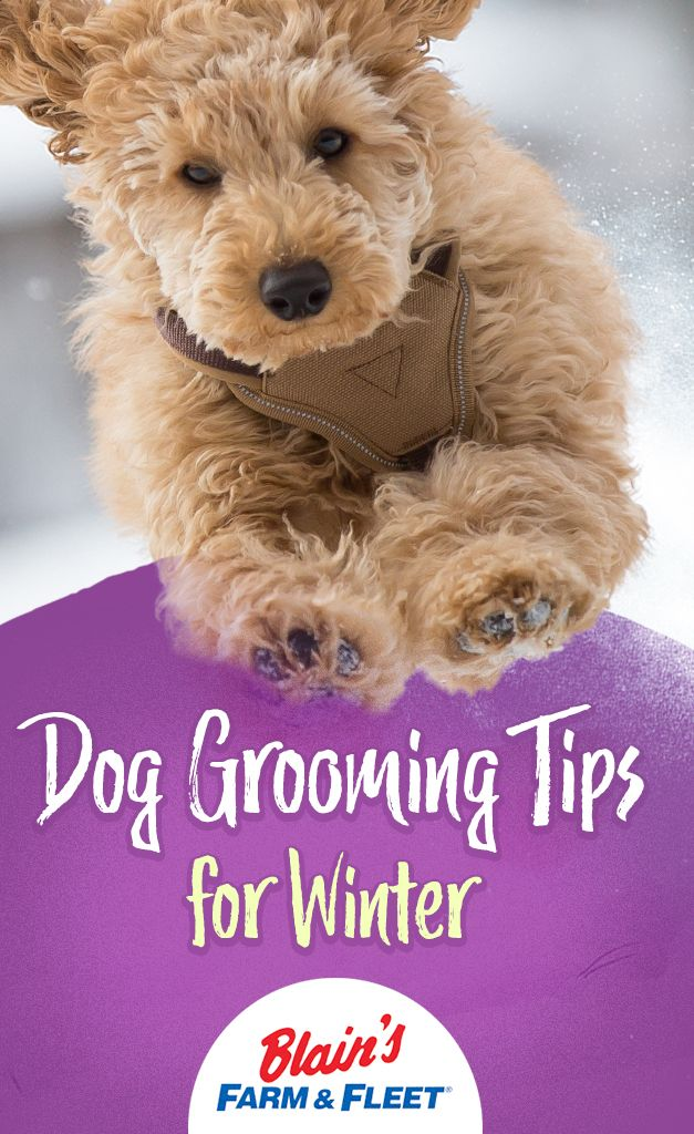 Dog Grooming Tips For Winter Dog Grooming Dog Grooming Tips