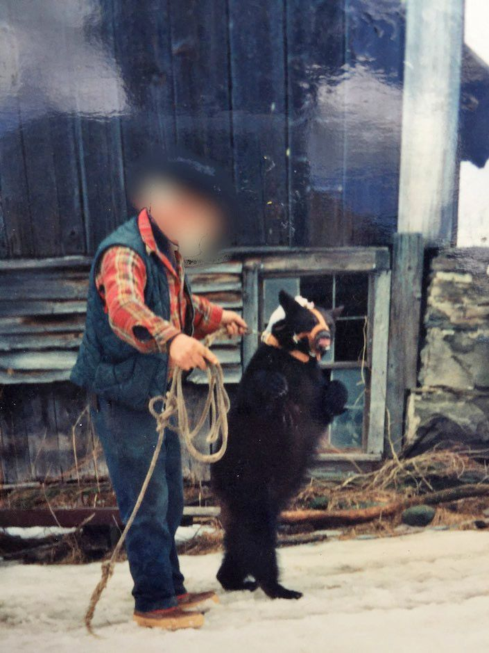 Rescued Bears Take First Steps of New Life | Campaigns | peta2.com