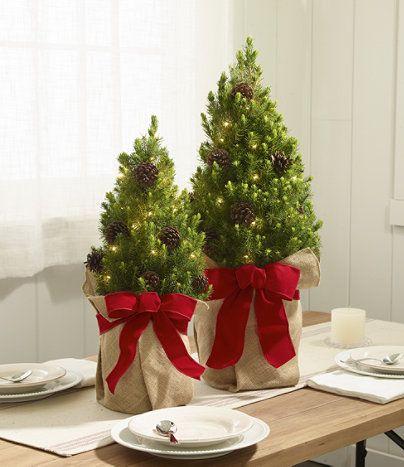 Woodland Tabletop Live Christmas Tree, Lighted