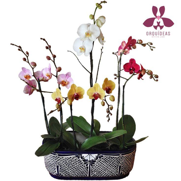 Arreglo Fiorentino, las mejores orquídeas.