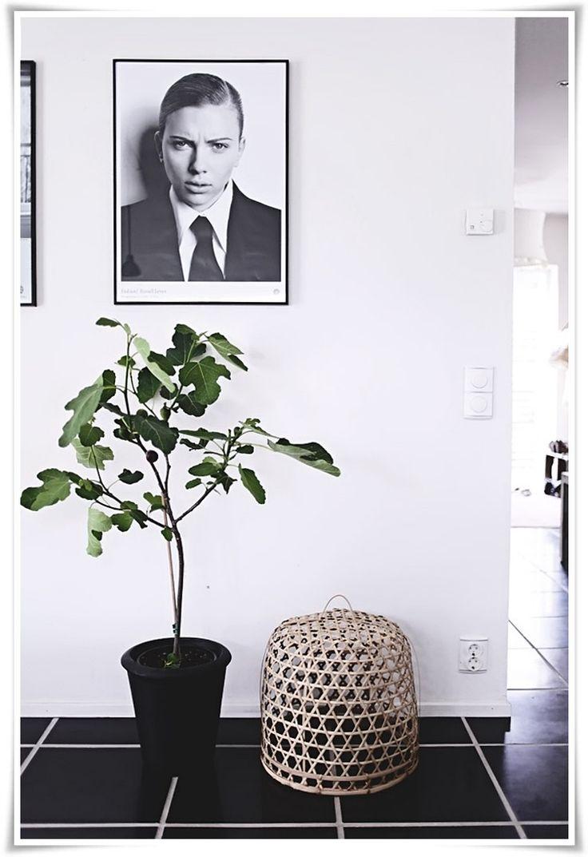 FIG TREE // Fikonträd | Helt enkelt | Sköna Hem