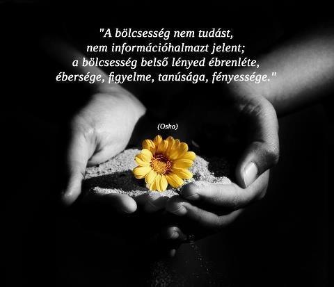 Osho gondolata a bölcsességről Dhammapáda című könyvéből. A kép forrása: Lélekringatás # Facebook
