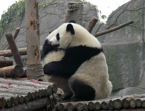 san diego zoo july 4th 2013